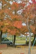Nanakubo-park11242007-03.jpg