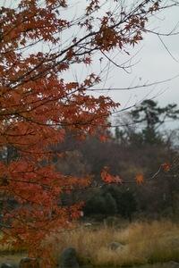 Oono_Minato-park12092007-02.jpg