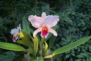 Orchid_Land01142008-205.jpg