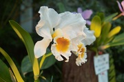 Orchid_Land01142008-206.jpg