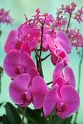 Orchid_Land01142008-209.jpg