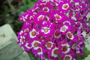 Orchid_Land01142008-212.jpg