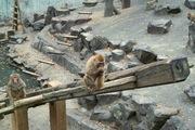 Shinrin-zoo11172007-02.jpg