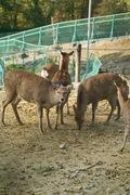 Shinrin-zoo11172007-04.jpg
