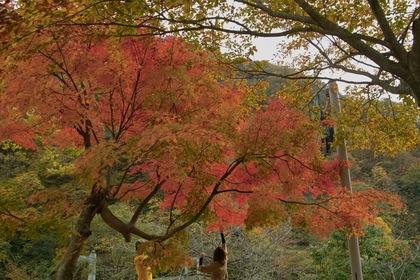 Shizenhogo-center11042007-01.jpg