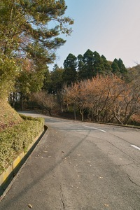 Takamatsu-park11242007-01.jpg