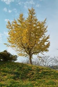 Takamatsu-park11242007-02.jpg