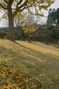 Takamatsu-park11242007-08.jpg