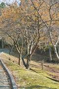 Takamatsu-park11242007-09.jpg