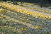 Takamatsu-park11242007-11.jpg