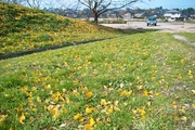 Takamatsu-park11242007-12.jpg