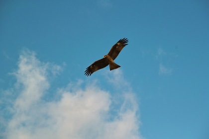 bird01-12082007.jpg