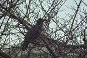 bird02-12092007.jpg