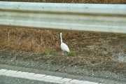 bird03-12082007.jpg