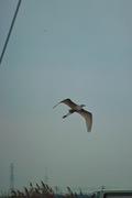 bird04-12082007.jpg