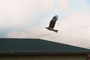 bird07-12082007.jpg