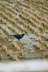 birds01062008-02.jpg