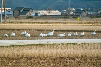 birds01062008-03.jpg