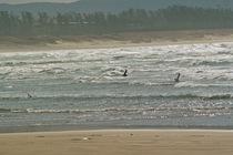 birds01062008-04.jpg