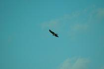 birds01062008-05.jpg