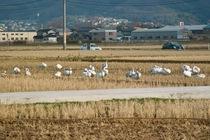 birds01062008-06.jpg