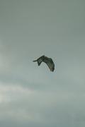 birds01132008-02.jpg