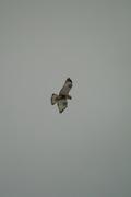 birds01132008-03.jpg