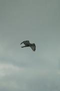 birds01132008-04.jpg