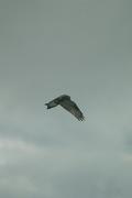 birds01132008-05.jpg