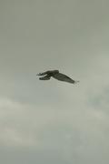 birds01132008-07.jpg