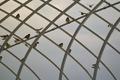 birds01132008-09.jpg