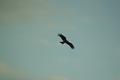 birds01132008-10.jpg
