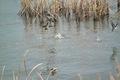 birds01132008-11.jpg