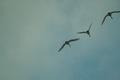 birds01132008-13.jpg