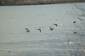 birds01132008-16.jpg