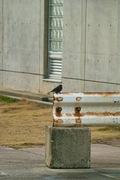 birds_Takiport12242007-03.jpg