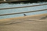 birds_Takiport12242007-06.jpg