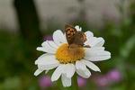 butterfly07092007.jpg