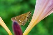 butterfly08052007.jpg