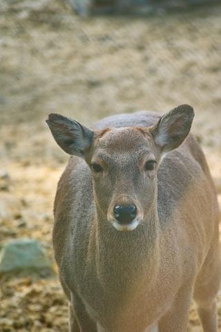 deer11172007.jpg