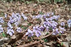 flower04152011dp2-2.jpg