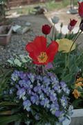 flower04292009-01dp2.jpg