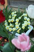 flower04292009-02dp2.jpg