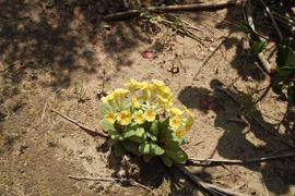 flower04292009-03dp2.jpg