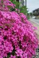flower05302009dp2-4.jpg