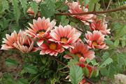 flower05302009dp2-5.jpg