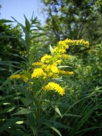 flower07272007-3.jpg