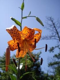 flower07272007-4.jpg