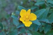 flower08052007-2.jpg