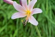 flower08052007-3.jpg